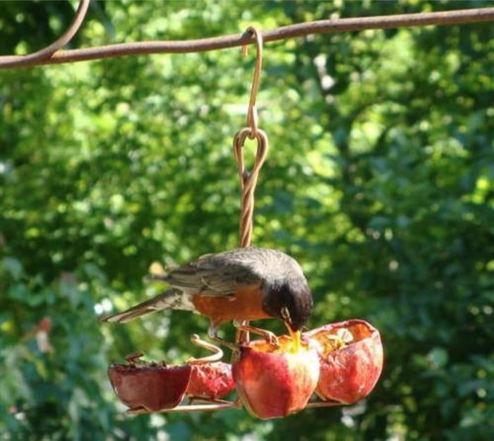 Songbird Essentials Apple Anchor Bird Feeders