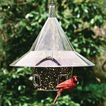 Mandarin Squirrel Proof Bird Feeder Perch
