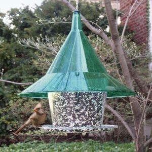 Mandarin Sky Cafe Green Squirrel Proof Bird Feeder