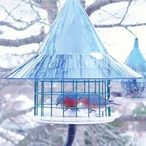 Sky Cafe Bluebird Squirrel Proof Bird Feeder