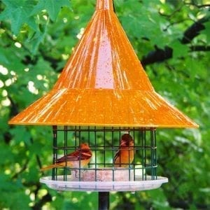 SkyCafe Oriole Squirrel Proof Bird Feeder