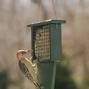 Suet Bird Feeders with Tail Prop