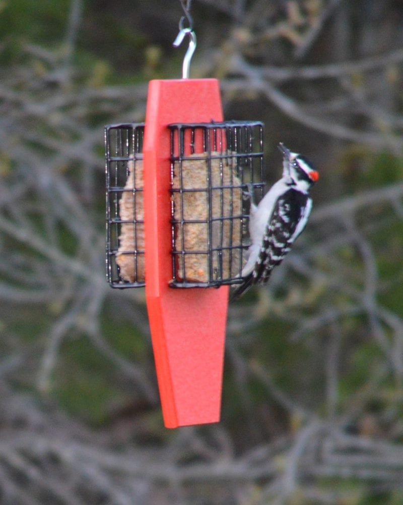 Red Dual Suet Bird Feeders with Tail Prop