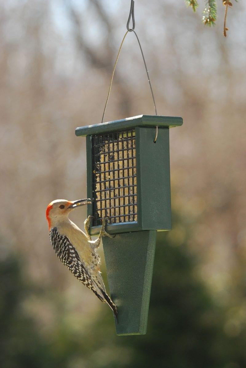 Suet Bird Feeder with Tail Prop