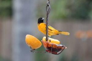 Oriole Bird Feeders